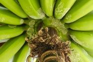 Banana, Chile
