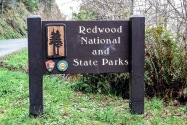 Redwood National & State Parks CA